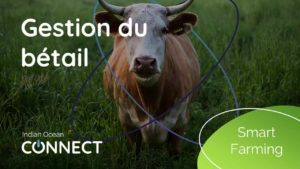 smart-farming-gestion-du-bétail
