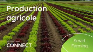 smart-farming-production-agricole