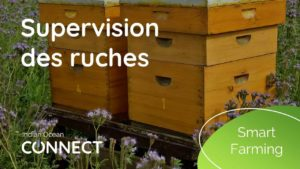 smart-farming-supervision-ruches
