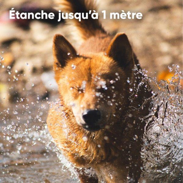 Etanche-waterproof-Traceur-gps-chien-chat